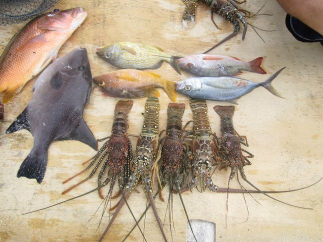 Mahahual lobster and some fish fresh caught.