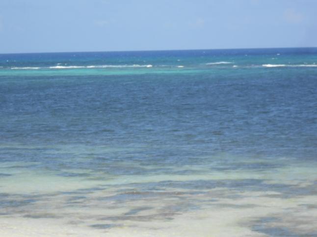 maya lna mangroves 024