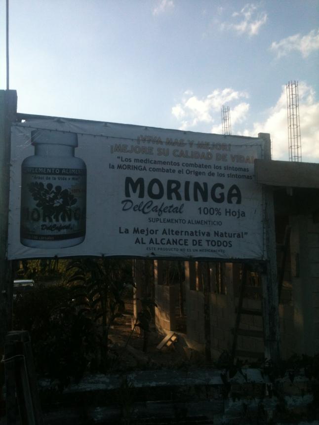 Moringa farm Bacalar, Mexico
