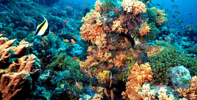 Banco Chinchorro, snails and coral world.