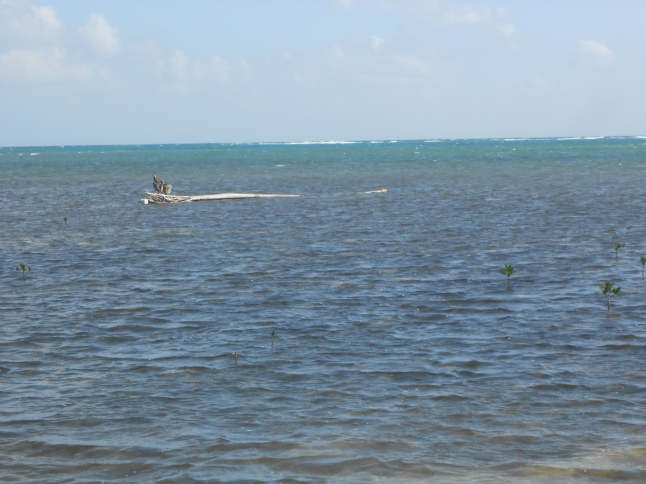 Coast of Belize