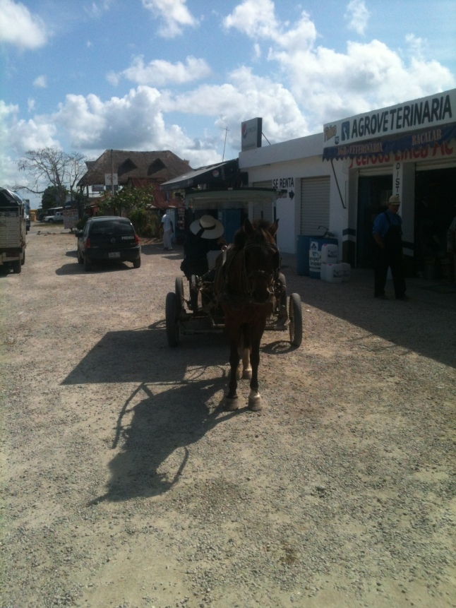 Mennonites yes, Amish no in Mexico.