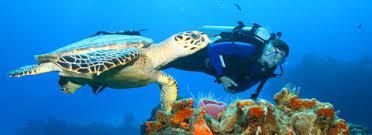 dive-tortuga