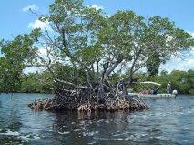 private island 5