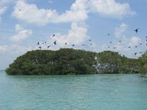 private island 6