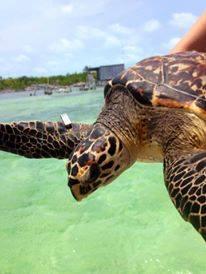 kayla turtles