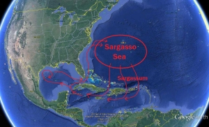 The Sargassum Loop System.