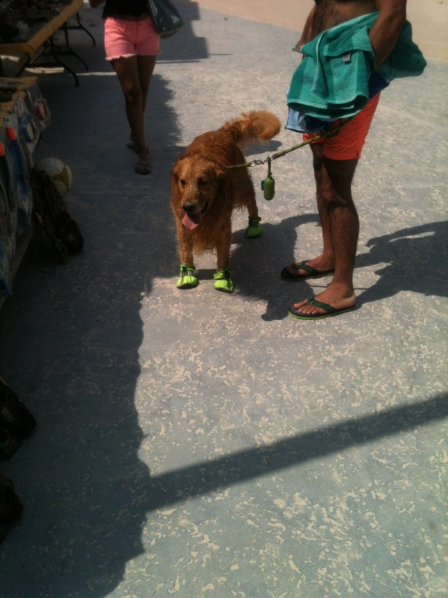 A first for me in Mahahual, seeing a dog wearing tennis shoes.