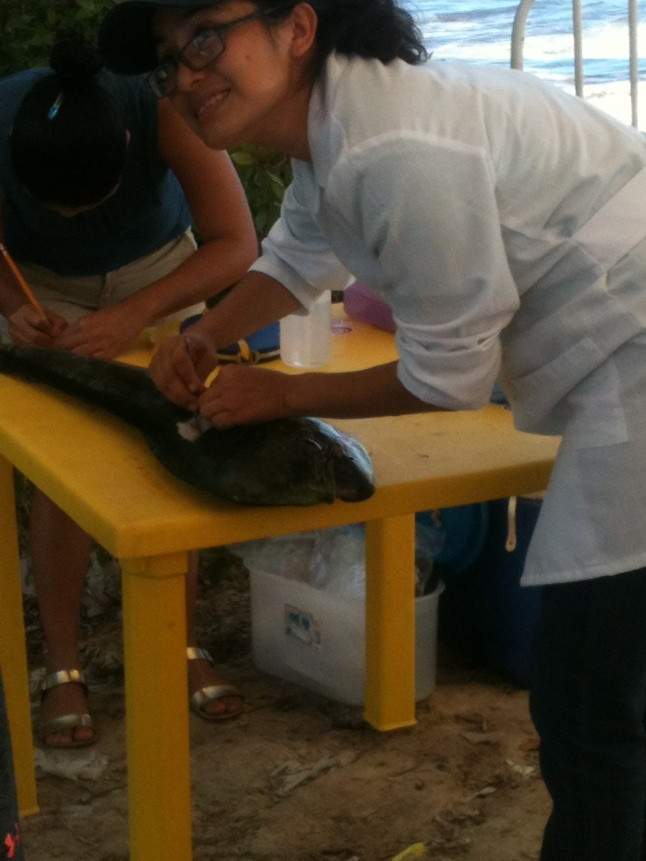 Sciencist from Chetumal taking samples from some of the fish caught.