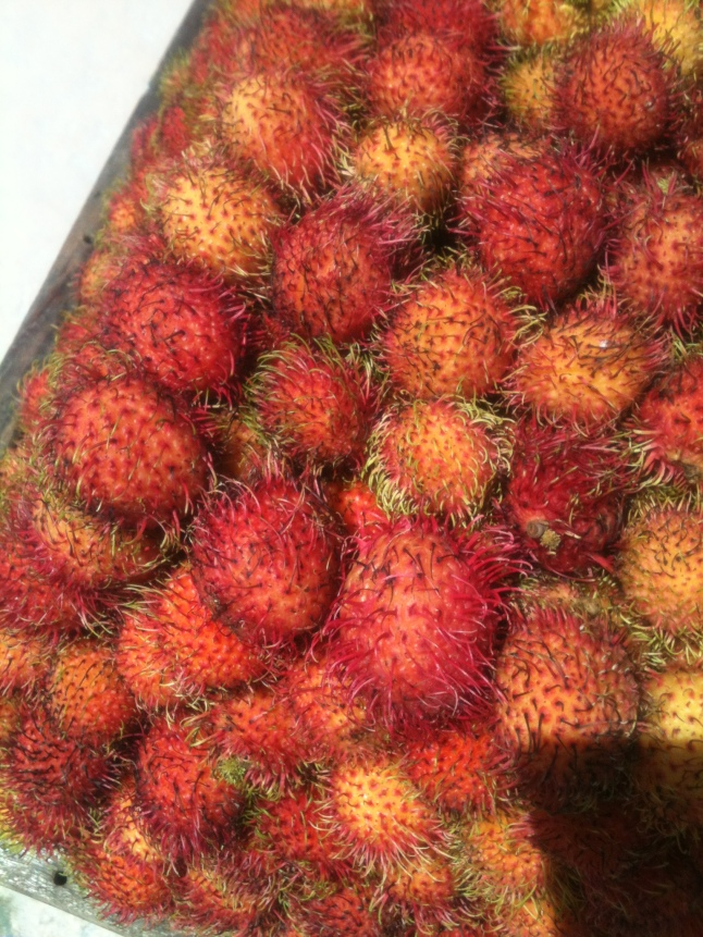 Small spiny balls, but taste great, and healthy.
