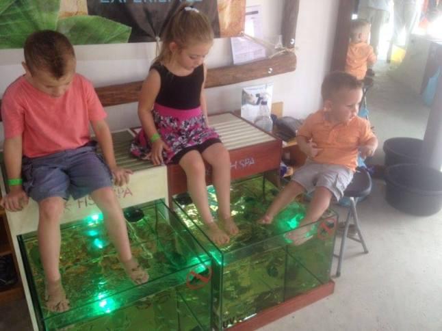 Young children enjoying a fish spa.